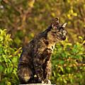 Cat by Lora Battle