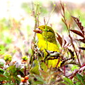 3395 - Tanager by Travis Truelove