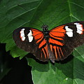 Butterfly by Patrick  Short