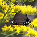 3454 - Butterfly by Travis Truelove