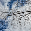 Trees Sky And Clouds by Robert Ullmann
