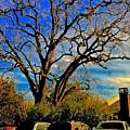 365 012716 Ancient Valley Oak And Parking by Scott L Holtslander