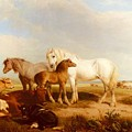 Willis Henry Brittan Horses And Cattle On The Shore Henry Brittan Willis by Eloisa Mannion
