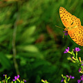 Butterfly And Flower Closeup by Carl Ning