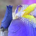 Iris by Michele Caporaso