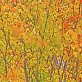 3983 Autumn Pleasure by Darrel Giesbrecht