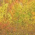 3991 Autumn Profusion by Darrel Giesbrecht