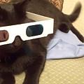 3d Cat by Eric  Schiabor