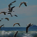 3d Gulls by Jean Booth