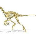 3d Rendering Of A Velociraptor Dinosaur by Leonello Calvetti