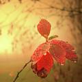 Autumn Fog by Alex Lim