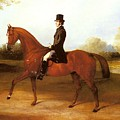 Barraud Henry Richard Paget Of Cropston Leicester On A Bay Hunter Henry Barraud by Eloisa Mannion