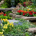 Botanical Gardens by Angela Rath