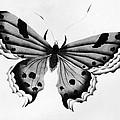 Butterfly by Granger