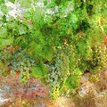 Chardonnay Grapes Close Up by Brandon Bourdages