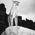 Cougar by Granger