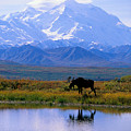 Denali National Park by John Hyde - Printscapes