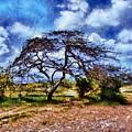 Desertic Tree by Galeria Trompiz