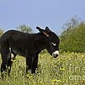 Donkey Foal by Jean-Louis Klein & Marie-Luce Hubert