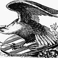 Eagle, 19th Century by Granger