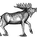 Elk/moose by Granger