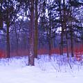 Forest by Wojtek Kowalski