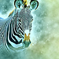Grevys Zebra, Samburu, Kenya by Humorous Quotes