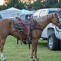 Horse by Glenn Matthews