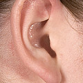 Human Ear by Ted Kinsman