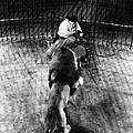Lion Tamer, 1930s by Granger