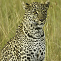 Lovely Leopard by Michele Burgess