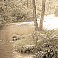 Mud Run Pocono Mountain Stream Pennsylvania by A Gurmankin