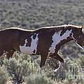 Mustang Stallion by Jean-Louis Klein & Marie-Luce Hubert