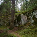 Old Forest In Kauppi Tampere by Jouko Lehto