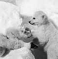 Polar Bear Cubs by Granger