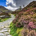 Snowdonia National Park - by Chris Smith