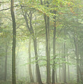 Stunning Colorful Vibrant Evocative Autumn Fall Foggy Forest Lan by Matthew Gibson