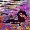 Swan Young Animal Bird Waters  by PixBreak Art