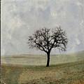 Textured Tree by Bernard Jaubert