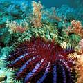 Thailand, Marine Life by Dave Fleetham - Printscapes