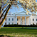 The White House by Brian Jannsen