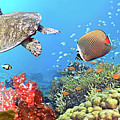 Underwater panorama by MotHaiBaPhoto Prints