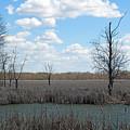 Wetlands by Linda Kerkau