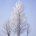 Winterscape by Jouko Lehto