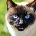 Cat  by FL collection