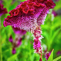 4390- Flower by David Lange