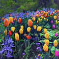 Procession Of Tulips by Jessica Jenney