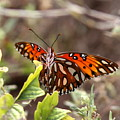4529 - Butterfly by Travis Truelove