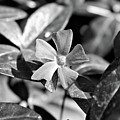 Flowers by Luke Robertson