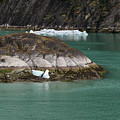 Alaska_00047 by Perry Faciana
